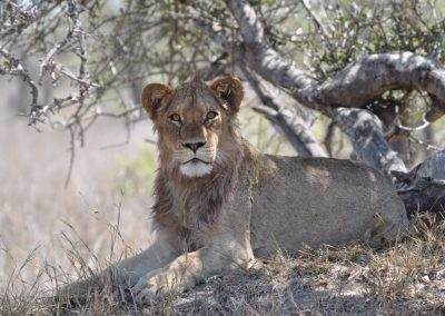 Kruger National Park Bookings
