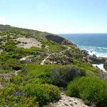 Whale Trail Adventure