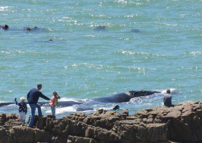 Whales.Hermanus