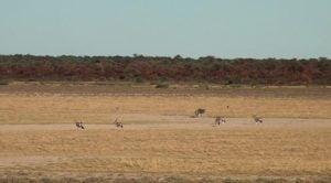 Botswana-Mabuasehube-Eland-Gemsbok