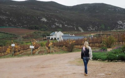 Overberg Wine Ramble
