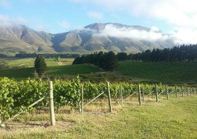Overberg Wine Walk