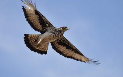 birding South Africa